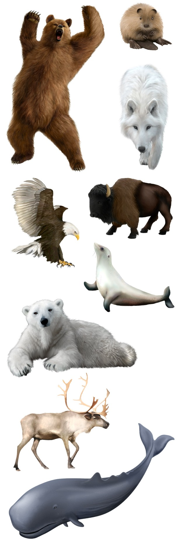 wild-north-animals